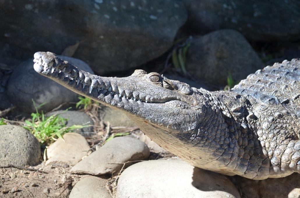 Gefährliche Tiere und Erste Hilfe Maßnahmen für Australien
