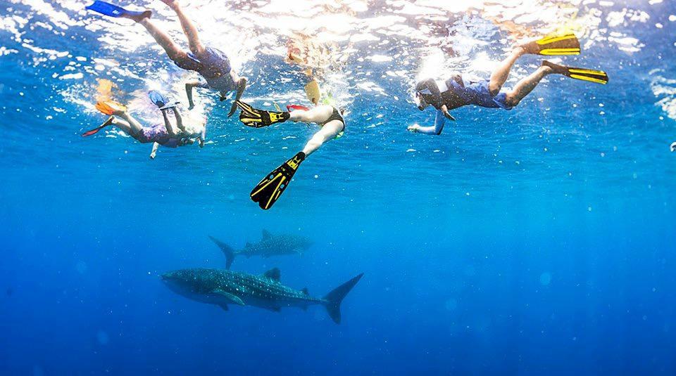 Exmouth & Ningaoo Reef - noch schöner als das Great Barrier Rief