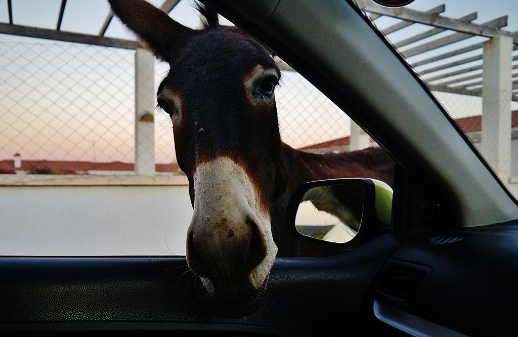 Insidertipp Karpas, wo die wilden Esel wohnen